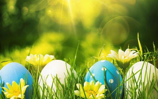 Обои Пасхальные яйца под солнечным светом в зеленой траве среди желтых цветов