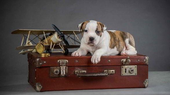 Обои Щенок лежит на чемодане, рядом с ним стоит игрушечный самолет и компас