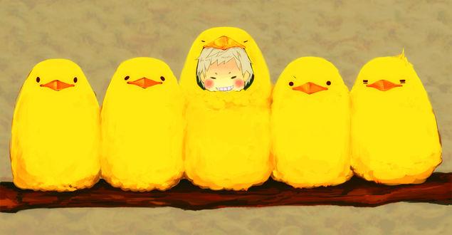 Обои Чиби Prussia / Пруссия из аниме Hetalia Axis Powers / Хеталия и страны Оси в костюме желтой птицы сидит среди желтых птиц, которые принимают его за собрата, благодаря удачно выбранной маскировки, by Pixiv Id 31602