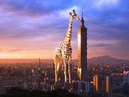 Обои Огромный жираф стоит у небоскреба
