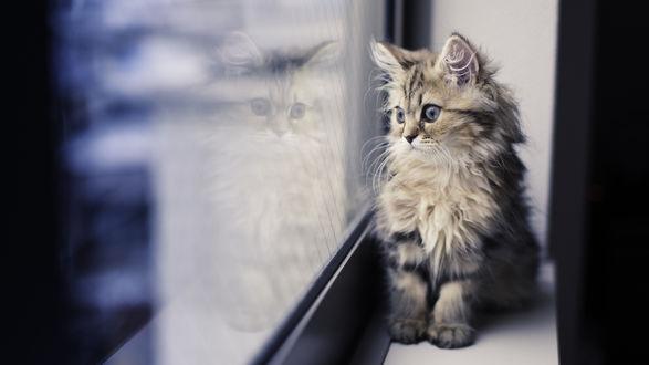 Обои Пушистый полосатый котенок, сидя на подоконнике, грустно смотрит в окно