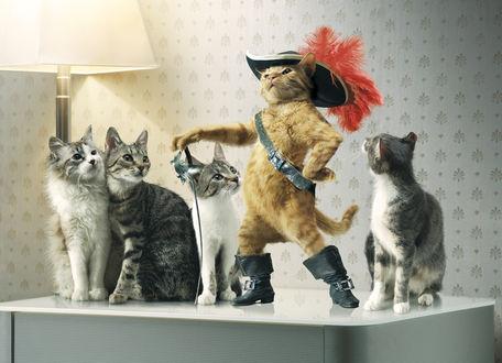 Обои Кошечки разглядывают рыжего кота в сапогах, шляпе и со шпагой