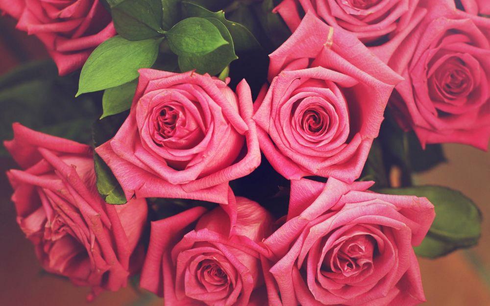розы картинки красивые розовые