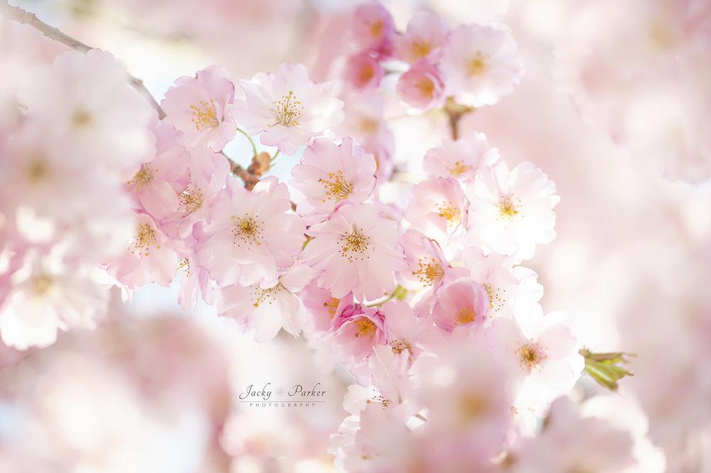 Обои цветы нежные
