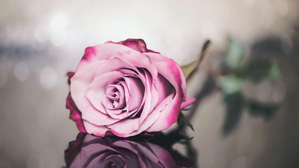 Серо розовые картинки на телефон, прекрасного дня для