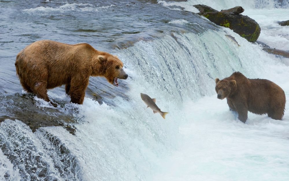 Обои для рабочего стола Медведи ловят рыбу у водопада