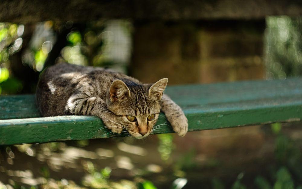 Кот смотрит на лапу