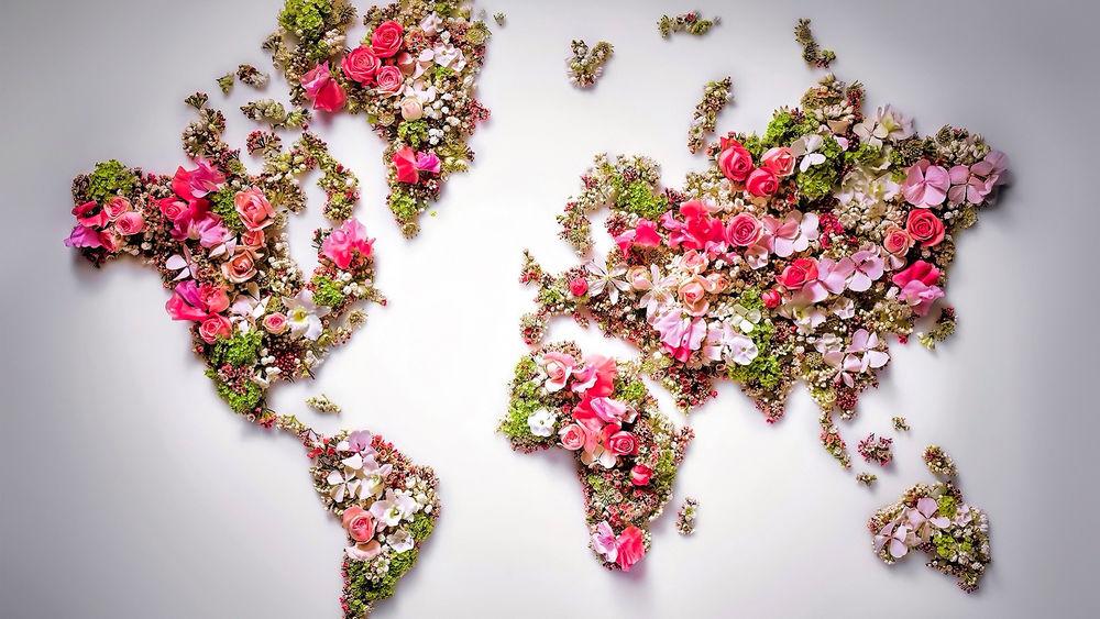 Цветы на карте