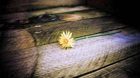 Обои Цветок, брошенный на дощатый пол. Свет и тени