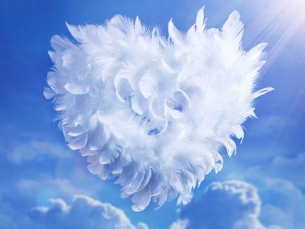 Обои Сердце из перьев на небе