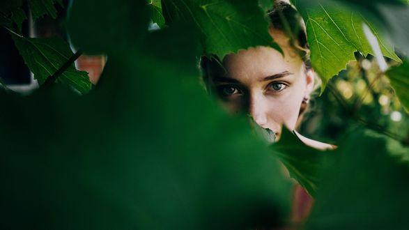 Обои Девушка подсматривает за нами сквозь зеленые листья