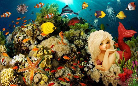 Обои Девушка русалка на морском дне с морскими обитателями