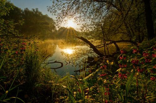 Обои Рассвет над рекой, фотограф adam-leviafun