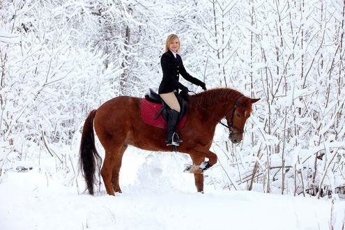 Обои Девушка в амазонке сидит на лошади в зимнем лесу
