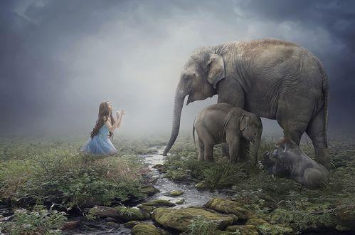 Обои Девушка сидит на коленях у ручья, рядом слониха со маленьким слоненком и обезьяна