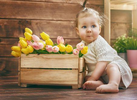 Обои Маленькая в белом вязанном платье сидит на полу у деревянного ящика с розовыми и желтыми тюльпанами