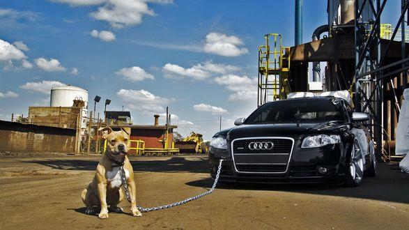 Обои Стаффордширский терьер, пристегнутый к авто, ждет хозяина, на фоне неба и промышленных сооружений