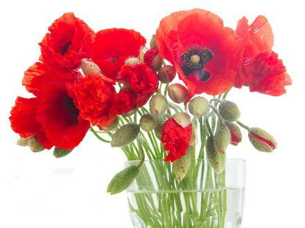Обои Ваза с цветами красного мака
