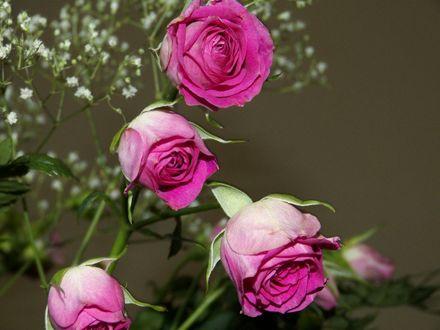 Обои Букет красивых розовых роз