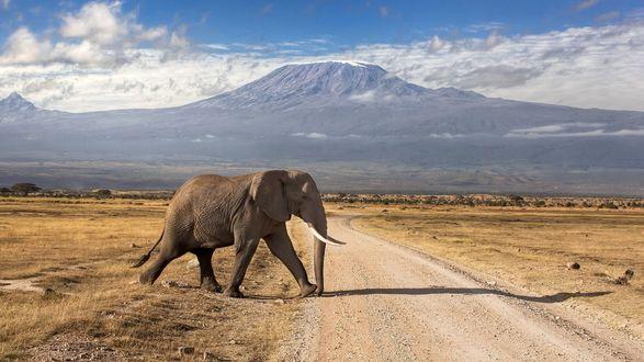 Обои Слон пересекает грунтовую дорогу в саванне, на горизонте горы и небо с белыми облаками
