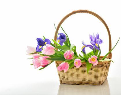 Обои Корзина с яркими тюльпанами и ирисами