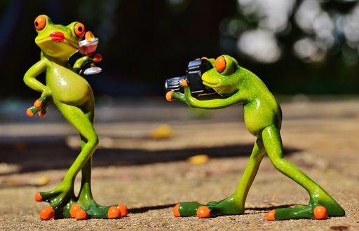Обои Лягушки устроили фотосессию