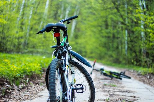 Обои Велосипеды на лесной дороге