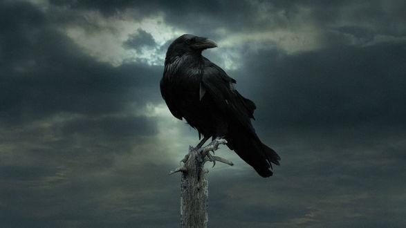 Обои Ворон сидит на верхушке дерева на фоне хмурого серого неба, х / ф Игры престолов