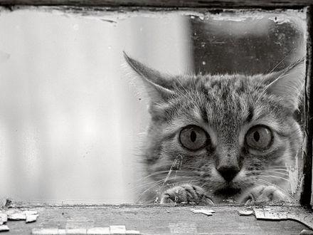 Обои Кот смотрит сквозь оконное стекло внутрь дома