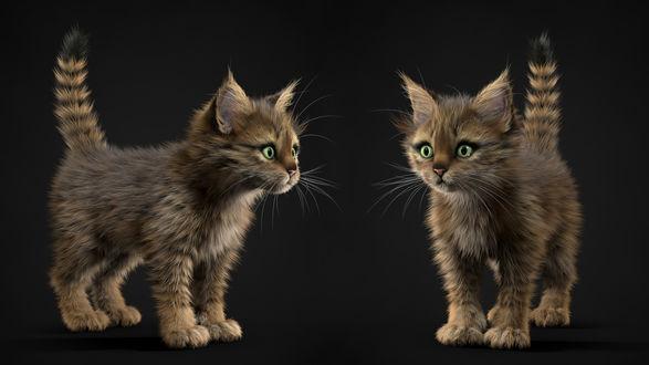 Обои Два пушистых котенка, by Alina Makarenko