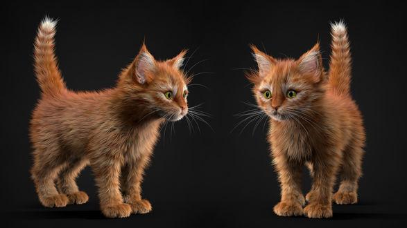 Обои Два рыжих котенка, by Alina Makarenko
