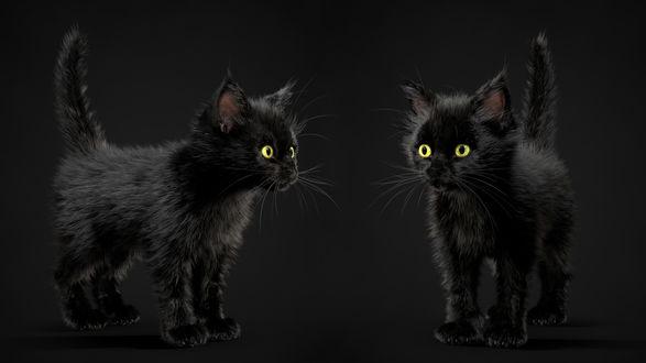 Обои Два черных котенка, by Alina Makarenko