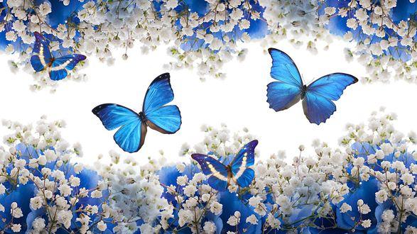 Обои Синие бабочки порхают меж веток цветущего дерева, весна