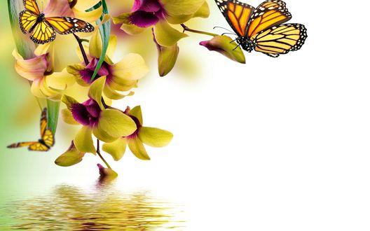 Обои Бабочки и орхидеи над водой, на белом фоне