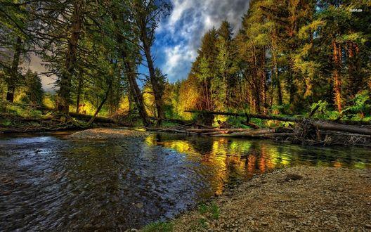 Обои Река, с поваленными в нее деревьями, на берегу реки осенний лес, сквозь который пробивается синее небо с облаками