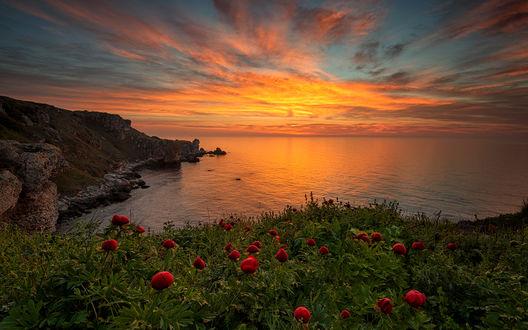 Обои Дикие пионы на побережье освещенные рассветом. От Марины Веселовой