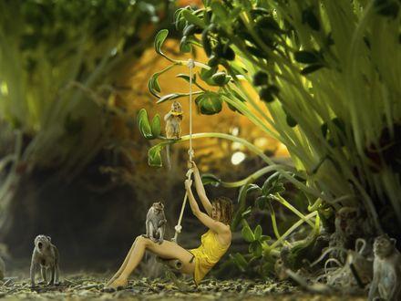 Обои Девочка катается на тарзанке, подвешенной на побегах растений, рядом с ней мартышки