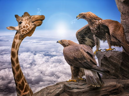 Обои Жираф заглядывает на вершину гор, где сидят удивленные орлы, внизу видны солнце и облака