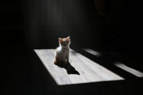 Обои Маленький котенок сидит на полу, фотограф Инна Сухова