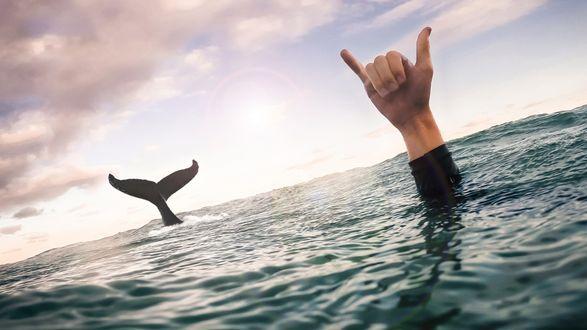 Обои Из моря выглядывает рука человека и хвост большой рыбы