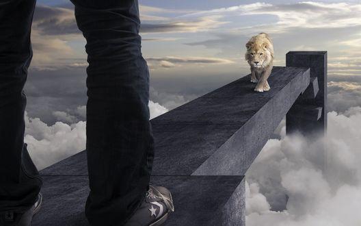 Обои На узкой дорожке над облаками, встретились человек и лев