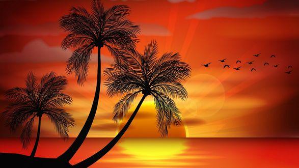 Обои Три пальмы на берегу моря на фоне красивого заката и стаи птиц