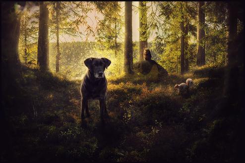 Обои Собака, белка и сова в лесу, by Nikkayla