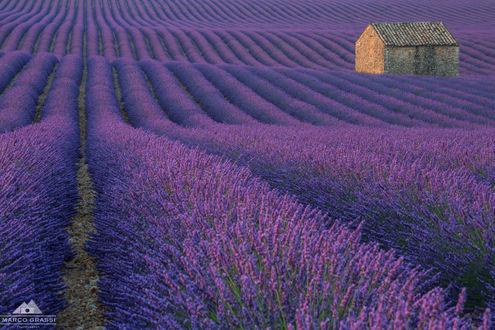 Обои Дом на лавандовом поле, фотограф Marco Grassi