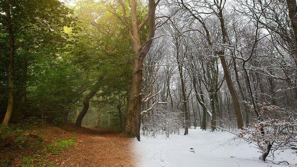Обои Между летом и зимой