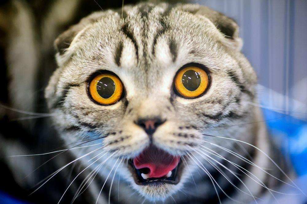 Кот удивленные глаза