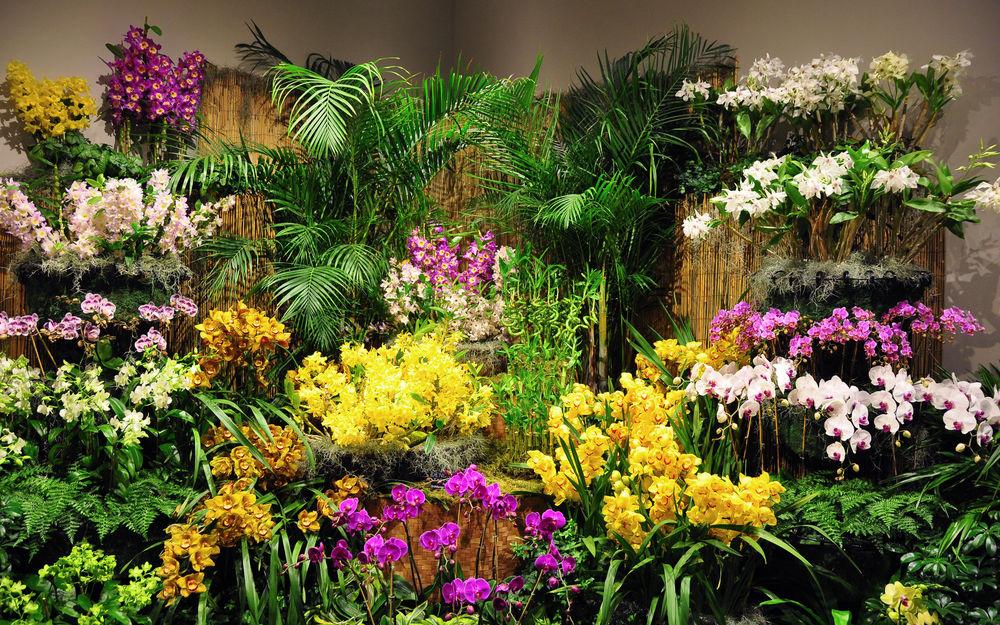 Оранжереи цветов