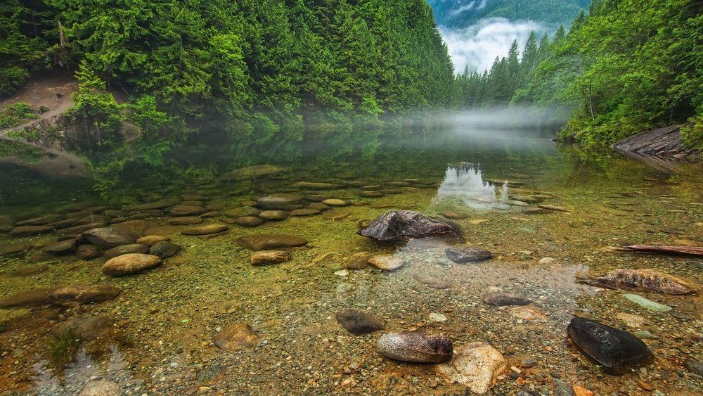 Обои для рабочего стола Тихая речка в глубине леса, сквозь прозрачную воду видно дно