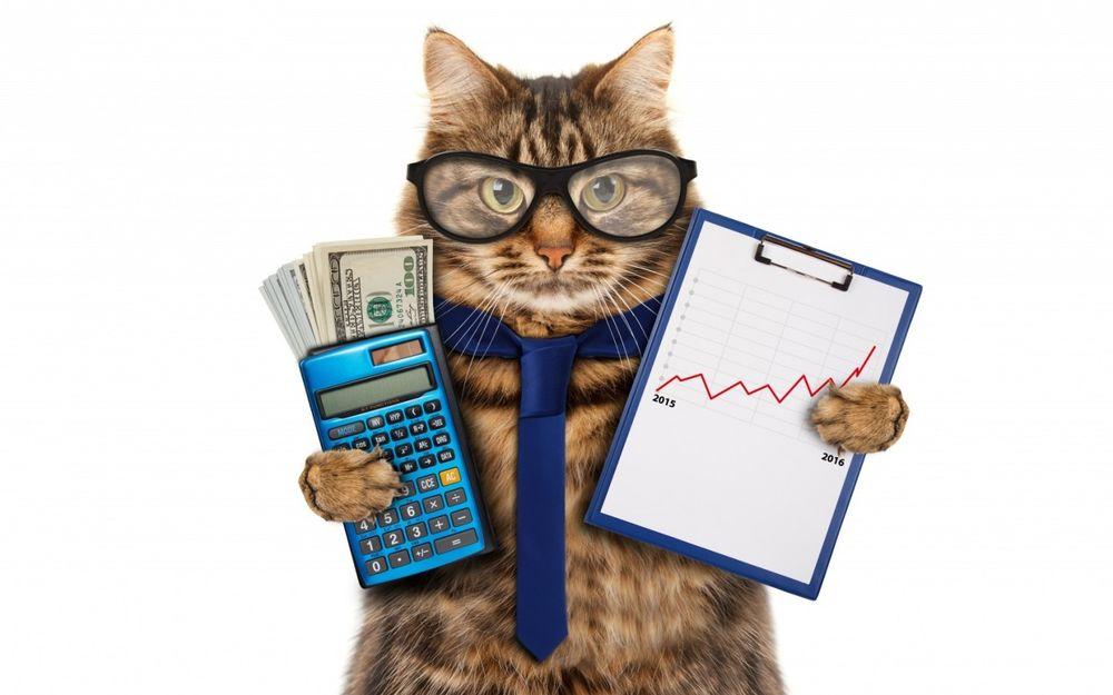 Кот в очках бумажных