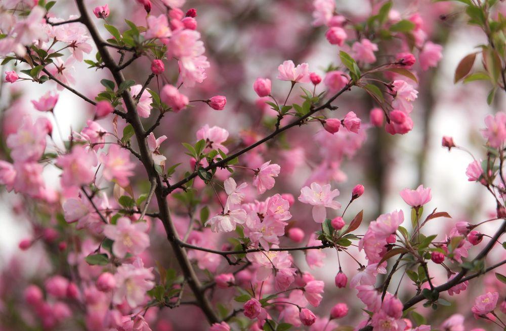 Turecki serial обиженные цветы